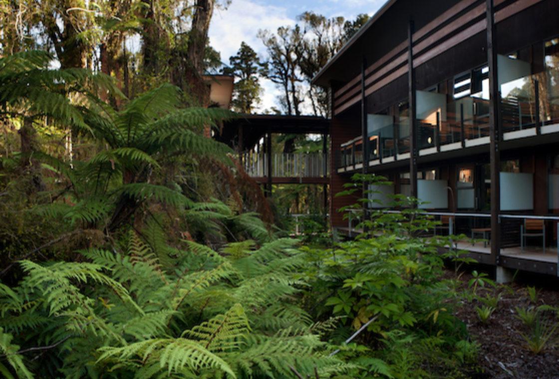Rain Forest 8